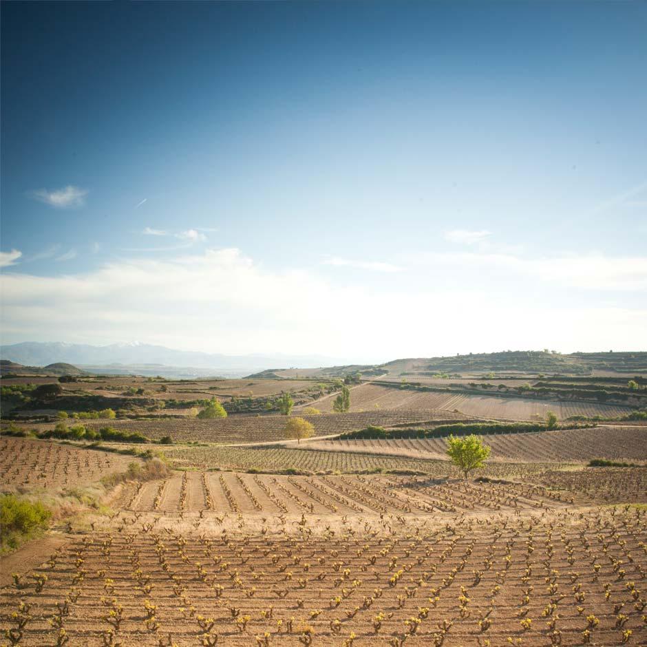 Comi, fotografía del viñedo de Bodegas Baigorri